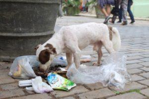 Perros abandono-Cuba