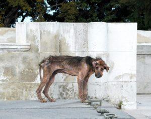 Perros en Cuba